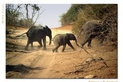 Ba-elephants