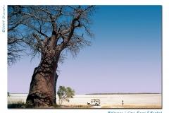 ceci panzi and the baobab