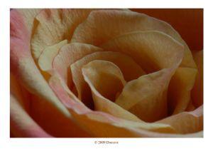 DDF_5282.jpg