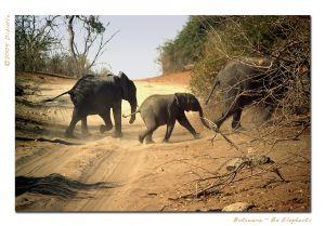 Ba-elephants.jpg