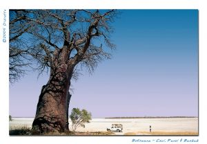 ceci panzi and the baobab.jpg