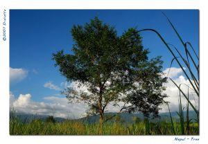 c35-Tree.jpg